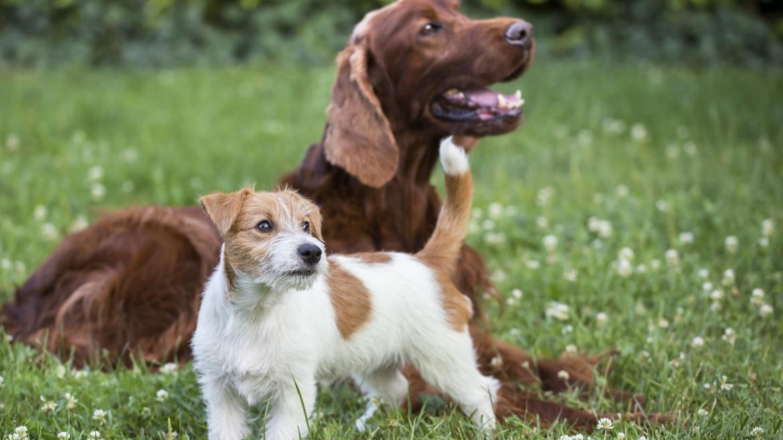 Ветеринарни услуги